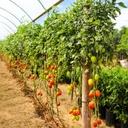Agricultura familiar no Show Safra 2020