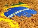 Brasil tem maior exportação de arroz dos últimos 9 anos